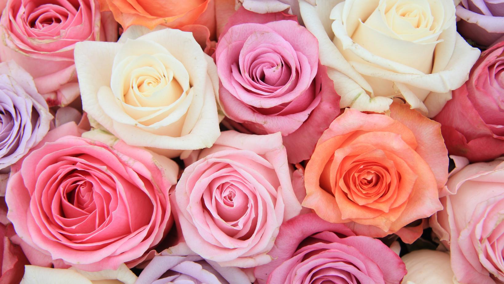 Roses & Rosés